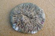 coral symmetry